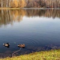 У озера. :: Larisa Ereshchenko