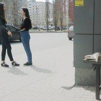 Три кошечки :: Владимир Ростовский