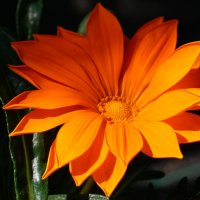 аленький цветочек :: Andrei Antipin