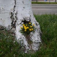 Оригинальный вазон у дороги :: Владимир Николаевич