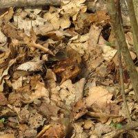 Новое для меня в жизни лягушек :: Андрей Лукьянов