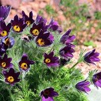 Весенние цветы :: Alexander Varykhanov