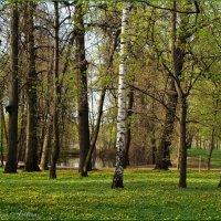 Робкая поступь весны :: °•●Елена●•° Аникина♀