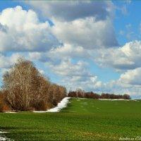 Ещё в полях белеет снег... :: °•●Елена●•° Аникина♀