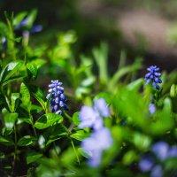 Цветы :: Виктория Гавриленко