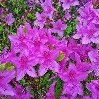 Красота Сеула в апреле :: Светлана