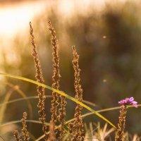 Красота природы :: Екатерина Рыбина
