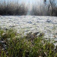 Первомайский снежок :: Алиса *****