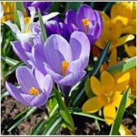Весны чудесное мгновение :: muh5257