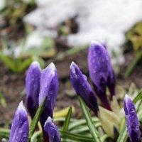 Май в снегах заполярья :: Ольга