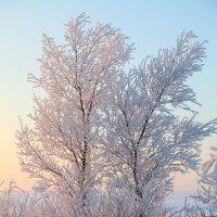 зимой :: Сергей