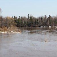 Река Кама, недалеко от Чуса... :: Александр Широнин
