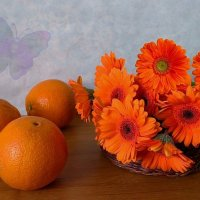 Герберы и апельсины :: Nina Yudicheva