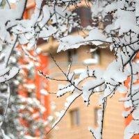 Майский снегопад :: Екатерина Торганская