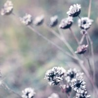 Цветы :: Оксана Сергеева