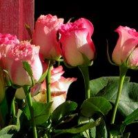 Нежные розы :: Наталья (D.Nat@lia) Джикидзе (Берёзина)