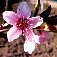 pink :: mAri