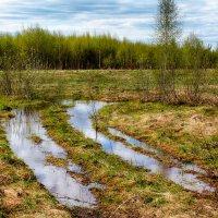 зеркала луж... :: Сергей Бойцов