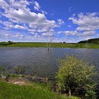 Озеро в Тиганово (северная оконечность) :: Дубовцев Евгений