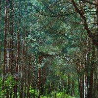 Краски весны в лесу :: spm62 Baiakhcheva Svetlana