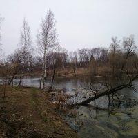 Старый пруд :: Наталия ***