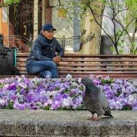 Где ты, моя голубка? :: Лара ***