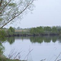 Майский вечер на пруду :: Вера Сафонова