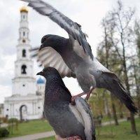 """"""" Фигура третья - Разлучная"""" :: Татьяна Помогалова"""