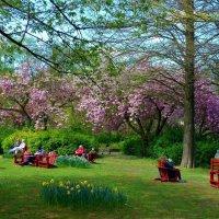 Апрель в городском парке (серия). Отдых под сакурами :: Nina Yudicheva
