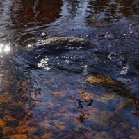Кто-то плыл по реке и молчал :: Владимир Гилясев