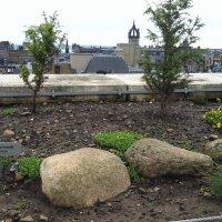 Шотландский садик на крыше Национального музея :: Марина Домосилецкая