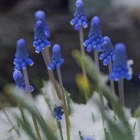 Весна :: Olga Rosenberg
