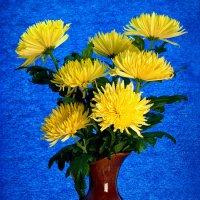Солнечные хризантемы :: Irina-77 Владимировна