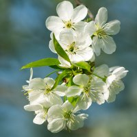 Весна :: Александр Руцкой