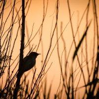 Ранняя птаха :: A_Performance ...