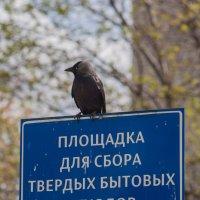 Смотрящий :: Дмитрий Костоусов