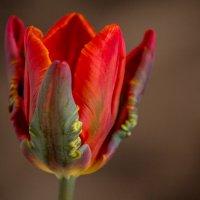 цветение :: Peteris Kalmuks