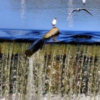 Чайки на дамбе :: Падонагъ MAX