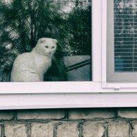 кошка в окошке :: Саша Милашкин