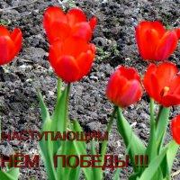 Только бы над миром небо было ясное  и на земле росли цветы :: Светлана