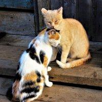 Кошки :: Сергей Чиняев