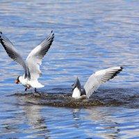 Птичьи салочки. :: Paparazzi