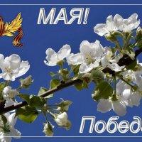 С Праздником ПОБЕДЫ! :: Татьяна Н.