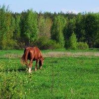 Ещё апрелем пахнет сок травы... :: Лесо-Вед (Баранов)