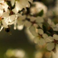 Весна! :: Лилия Гиндулина