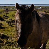 Дикий конь :: Anna
