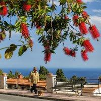 Цветущая Сицилия. На прогулке :: Galina