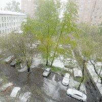 8 МАЯ ... а снег идёт... :: Александр Шурпаков
