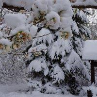 Снежный плен :: Екатерина Торганская