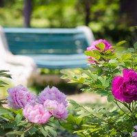 В саду :: Елена Данько